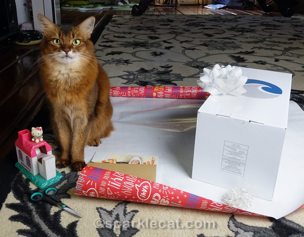 Summer's human is wrapping a birthday present for her boyfriend. But she need feline gift wrapping supervision to get it right.