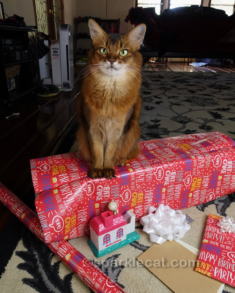 Somali cat sitting on partially wrapped presents