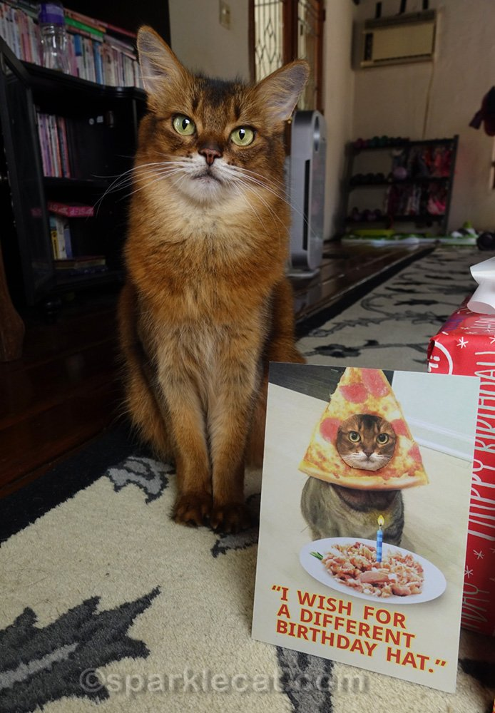 Somali cat next to birthday card with her face taped on it