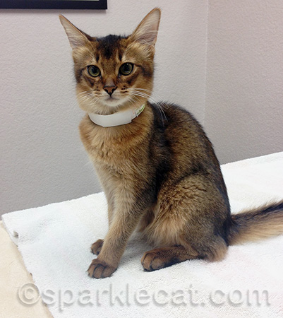 They don't put these on you at cat shows!