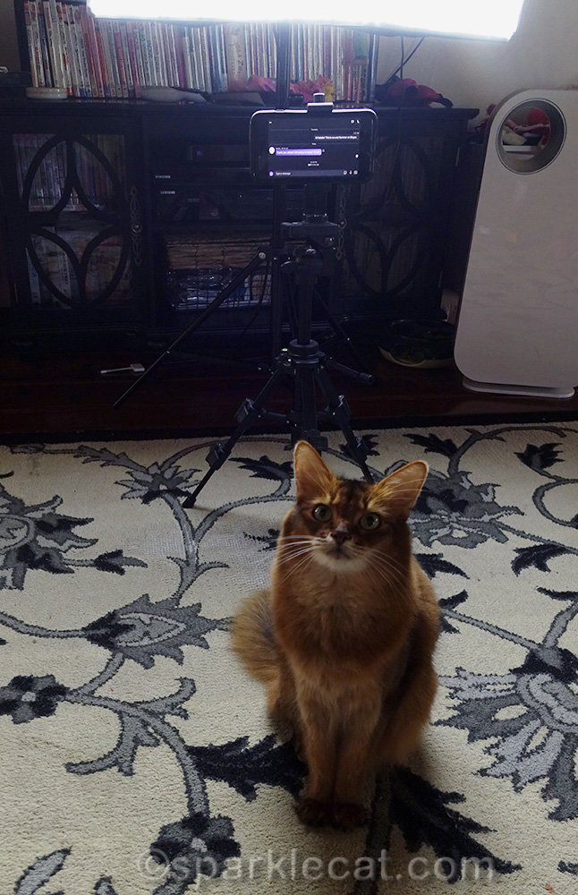 Summer and her human have a Skype audition for a show on a streaming network.