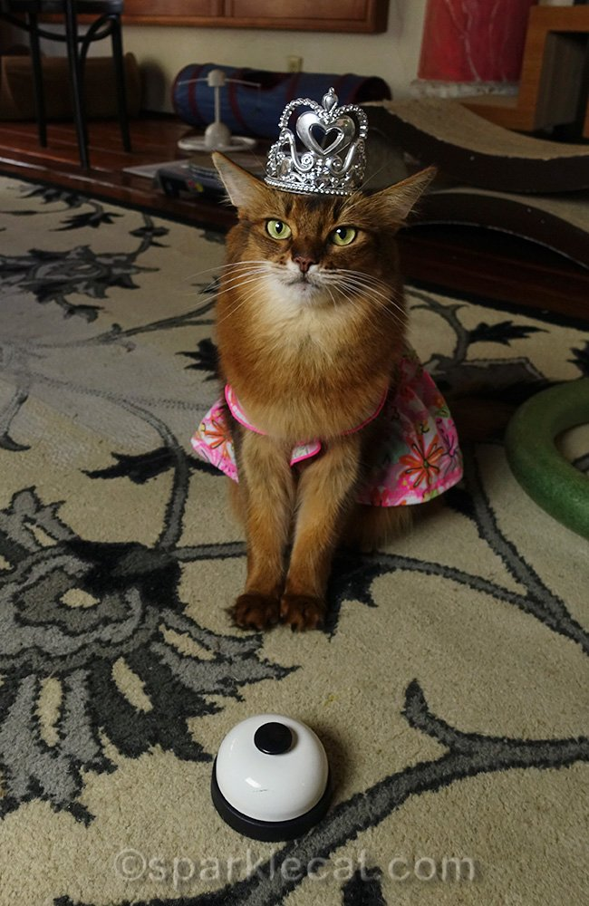 somali cat with crown and desk bell
