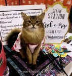 With all her talk about them, some of Summer readers may be wondering what are cat shows anyway! So she answers that, and some other questions.