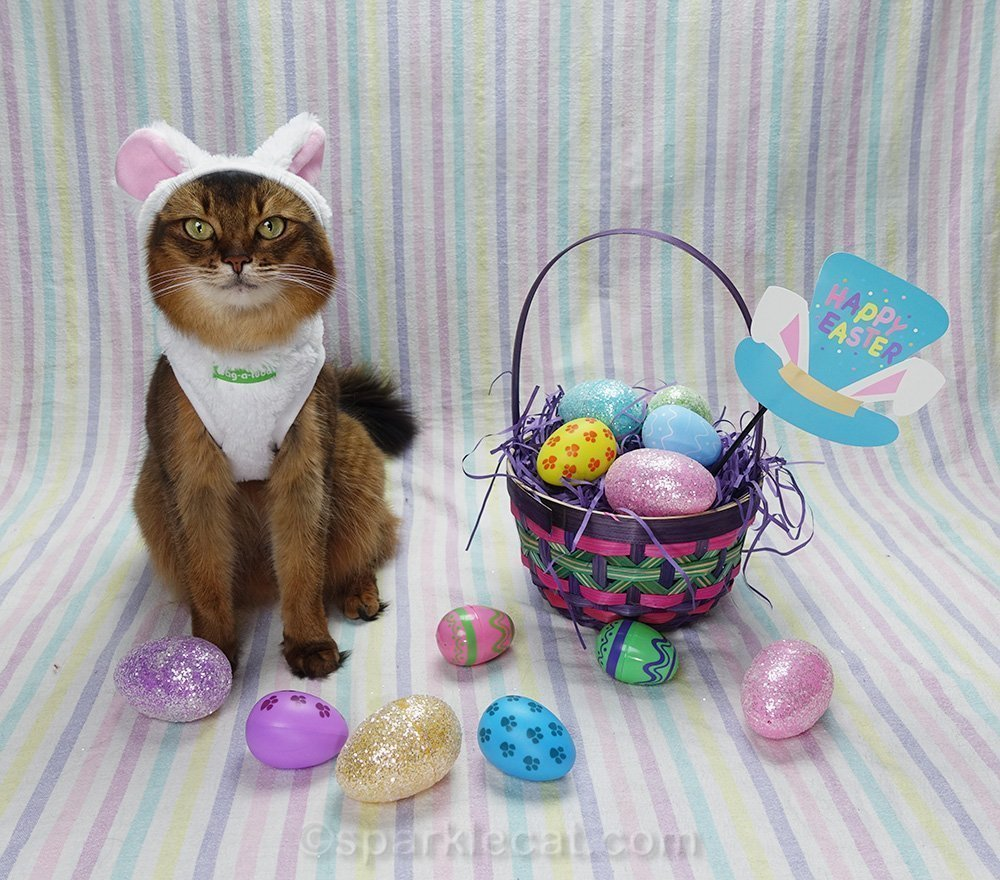 somali cat in bunny costume and easter set