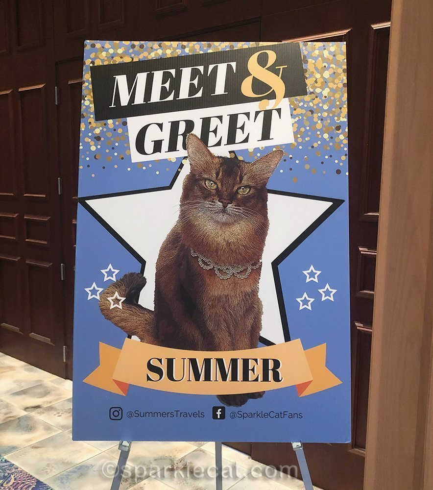 celebrity cat meet and greet sign