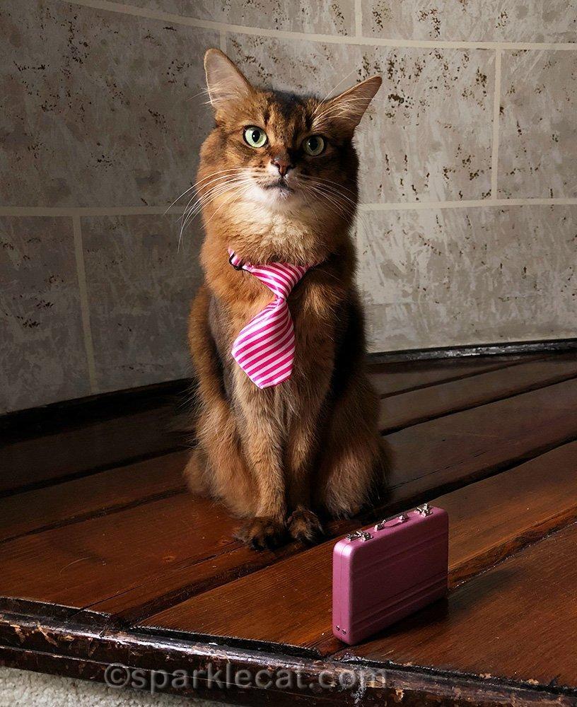somali cat in necktie with briefcase