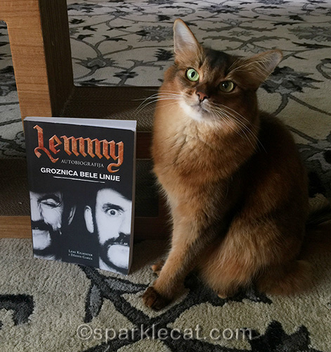 somali cat posing with Serbian edition of White Line Fever