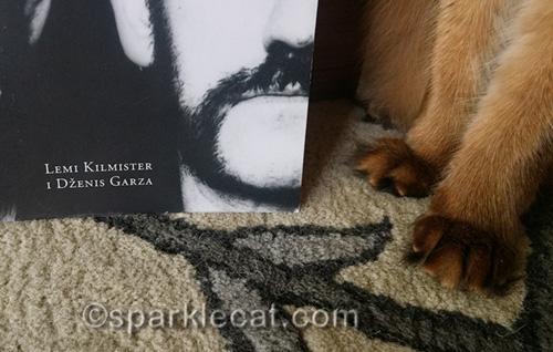 somali cat feet next to book credit