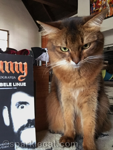somali cat sets up for bookish selfies