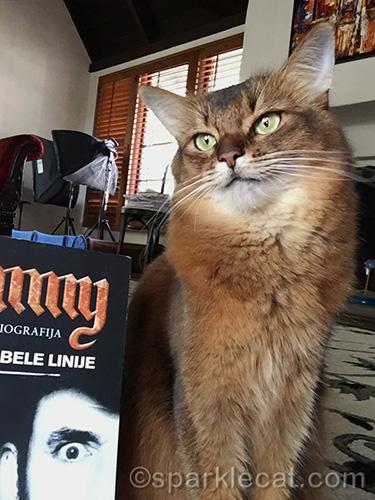 somali cat poses for bookish selfie