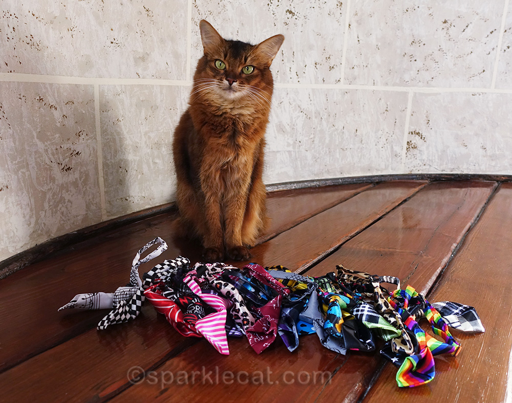somali cat with 20 brand new pet neckties