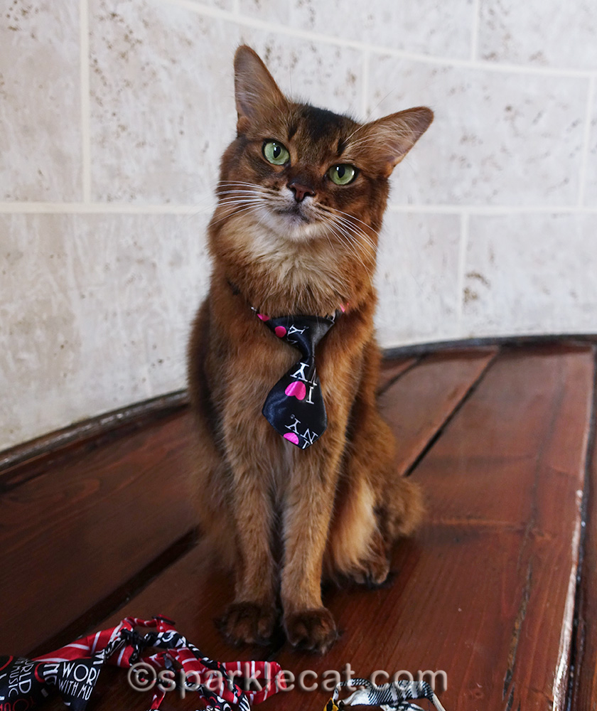 somali cat wearing I Heart New York tie