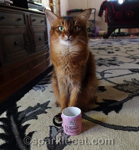 somali cat with Hollywood gift mug