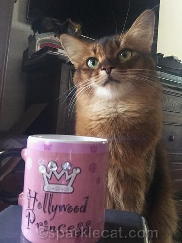 somali cat striking a glam pose with a Hollywood Princess gift mug.