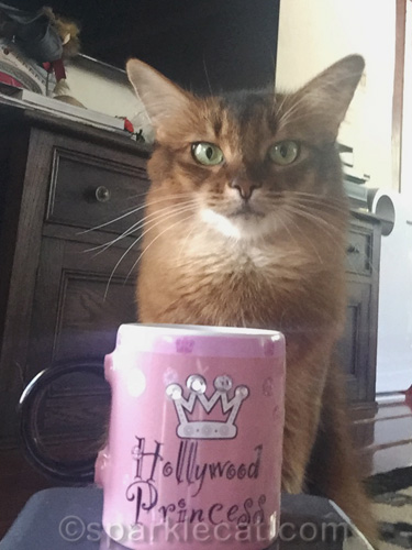 somali cat doing a selfie with her new Hollywood Princess gift mug