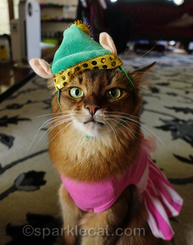 confused somali cat wearing elf hat