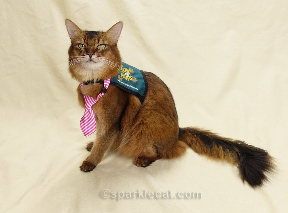 Summer explains the one part of therapy cat training no one ever thinks to ask.