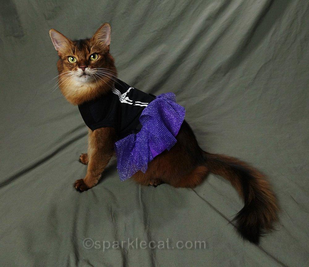 somali cat wearing too-short Halloween dress