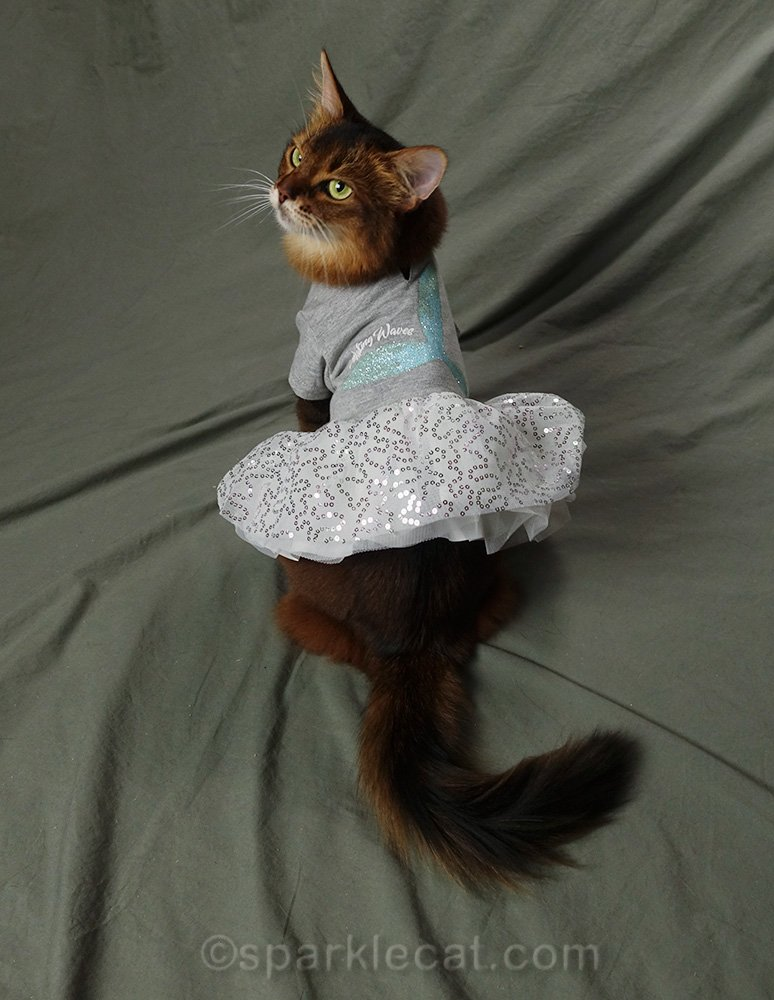 somali cat wearing gray dress with flouncy, sequined dress