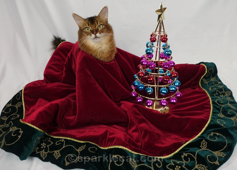 Somali cat in a bad Christmas photo shoot