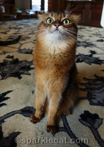 very stoned somali cat