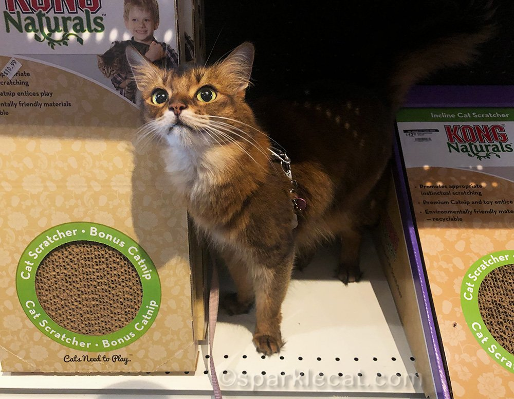 Summer goes to the pet store and proves she is a well-behaved shopper.
