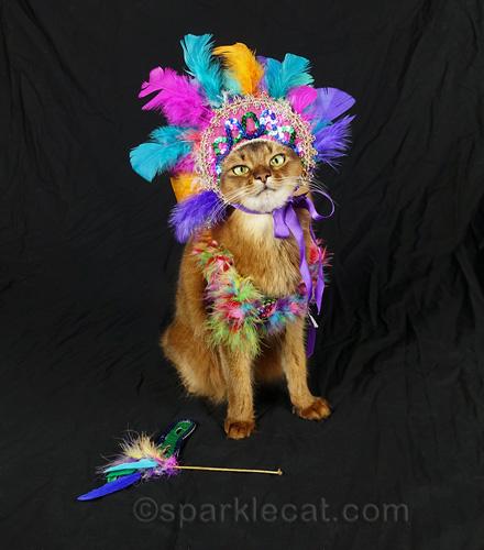 somali cat in Mardi Gras feathered headdress