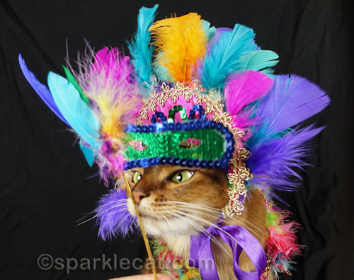 somali cat peeking out from under a carnival mask