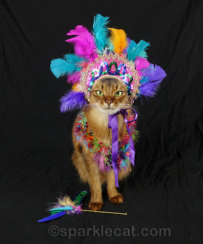 somali cat wearing mardi gras headdress with mask at her feet