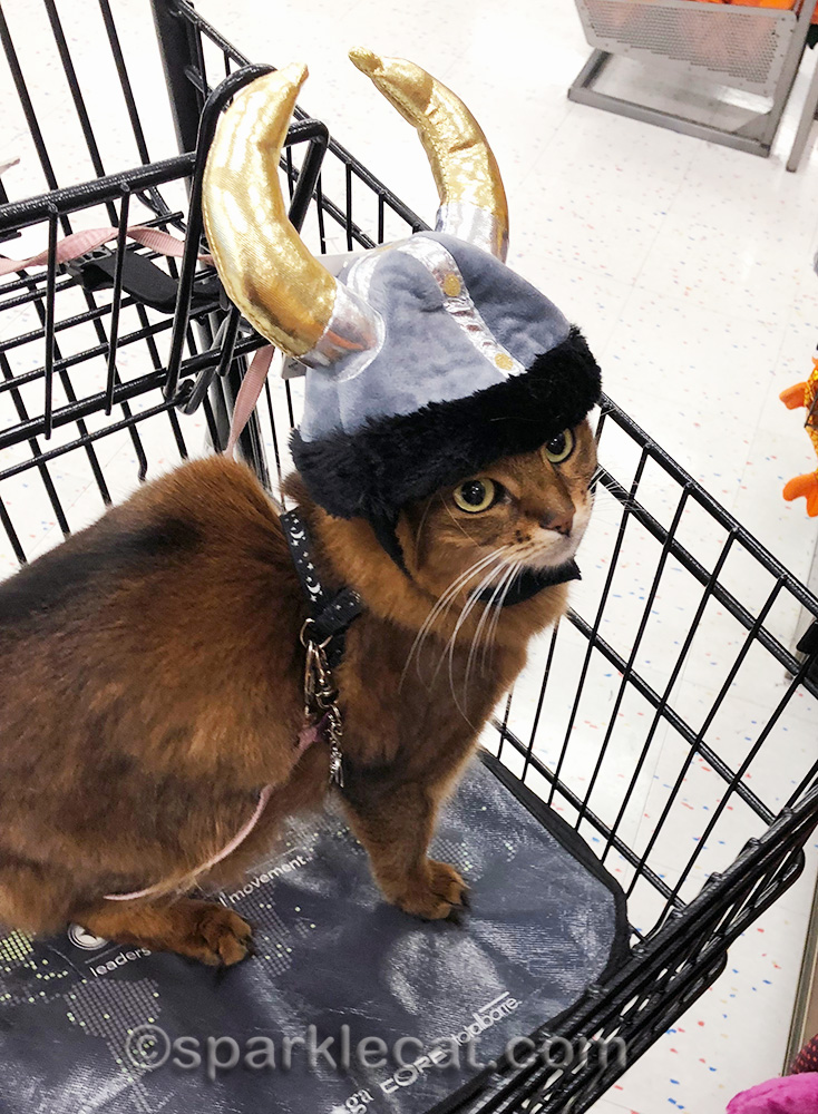 somali cat wearing too-big viking helmet
