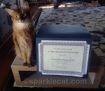 Somali Cat Awards – I Got 'Em!