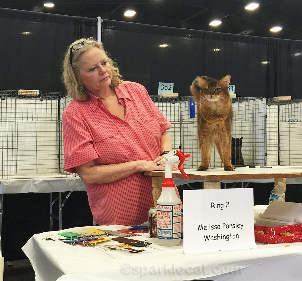ca show judge judging somali cat in Phoenix