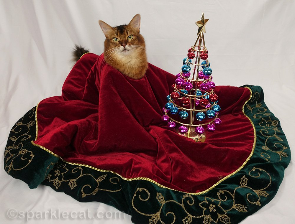 somali cat wrapped in Christmas tree skirt