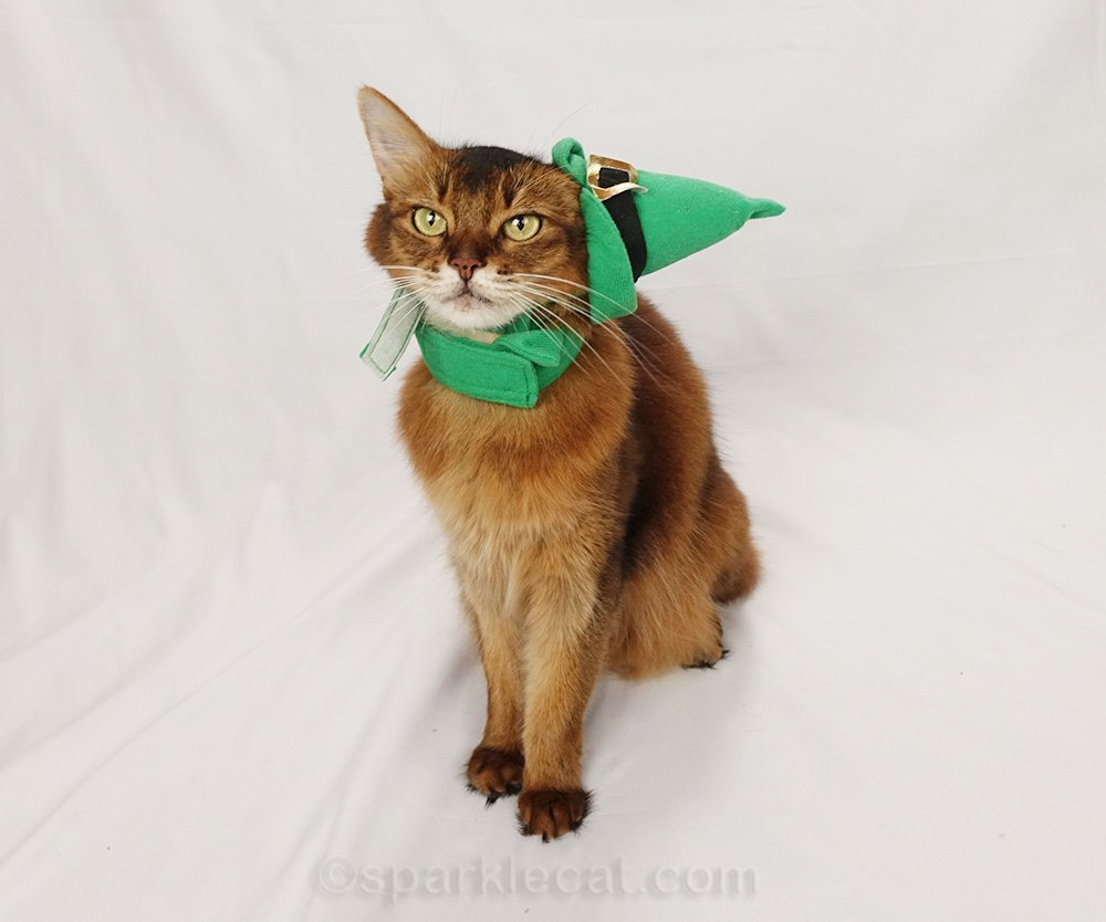 somali cat with elf collar and hat