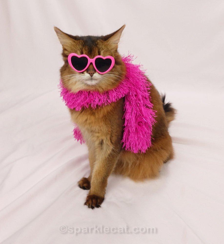 Somali cat wearing pink boa and pink heart sunglasses