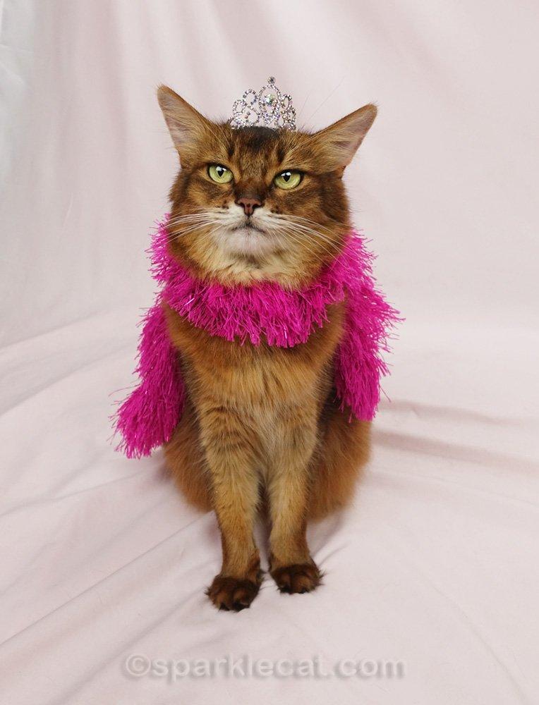 Somali cat wearing a pink boa and a tiara