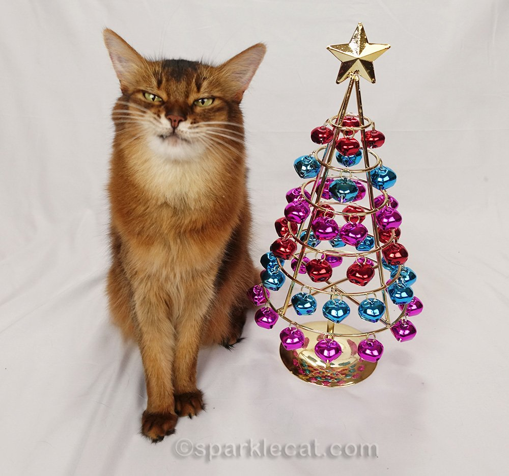 somali cat making a grimace with jingle bell tree