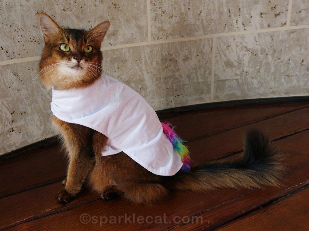 Somali cat wearing body of unicorn costume