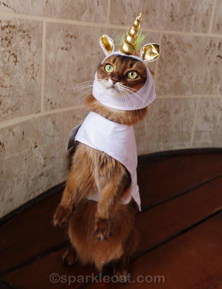 Somali cat in unicorn costume, standing on hind legs