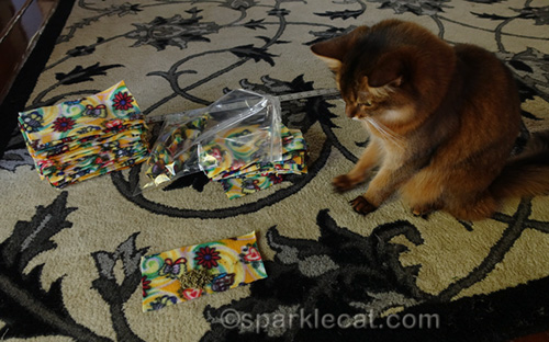 somali cat supervising nip knot making