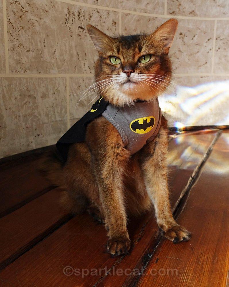 Somali cat dressed up as Batkitty