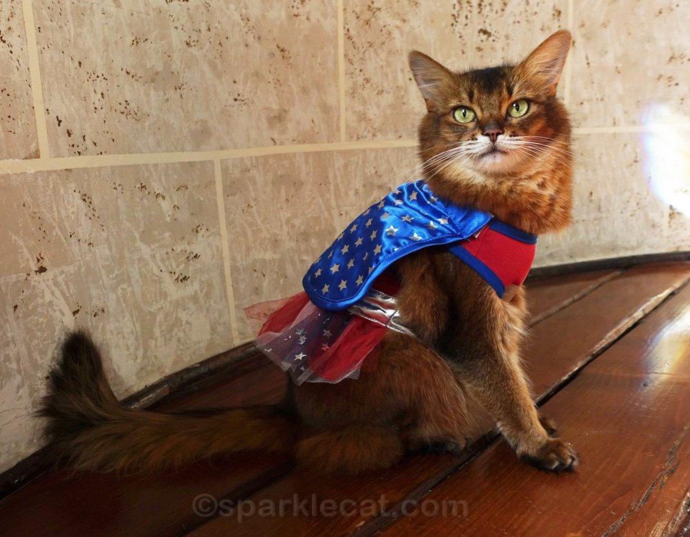 Somali cat in Wonderkitty costume.