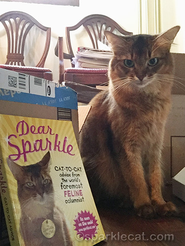 somali cat taking a selfie with book by another somali cat
