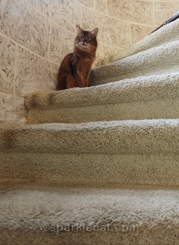 somali cat on turret stairs