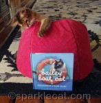 Bailey Boat Cat Giveaway!