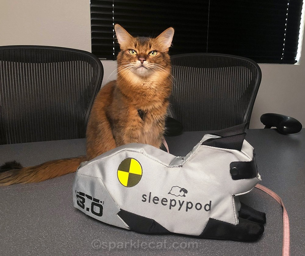 somali cat with cleo, the crash test kitty for Sleepypod