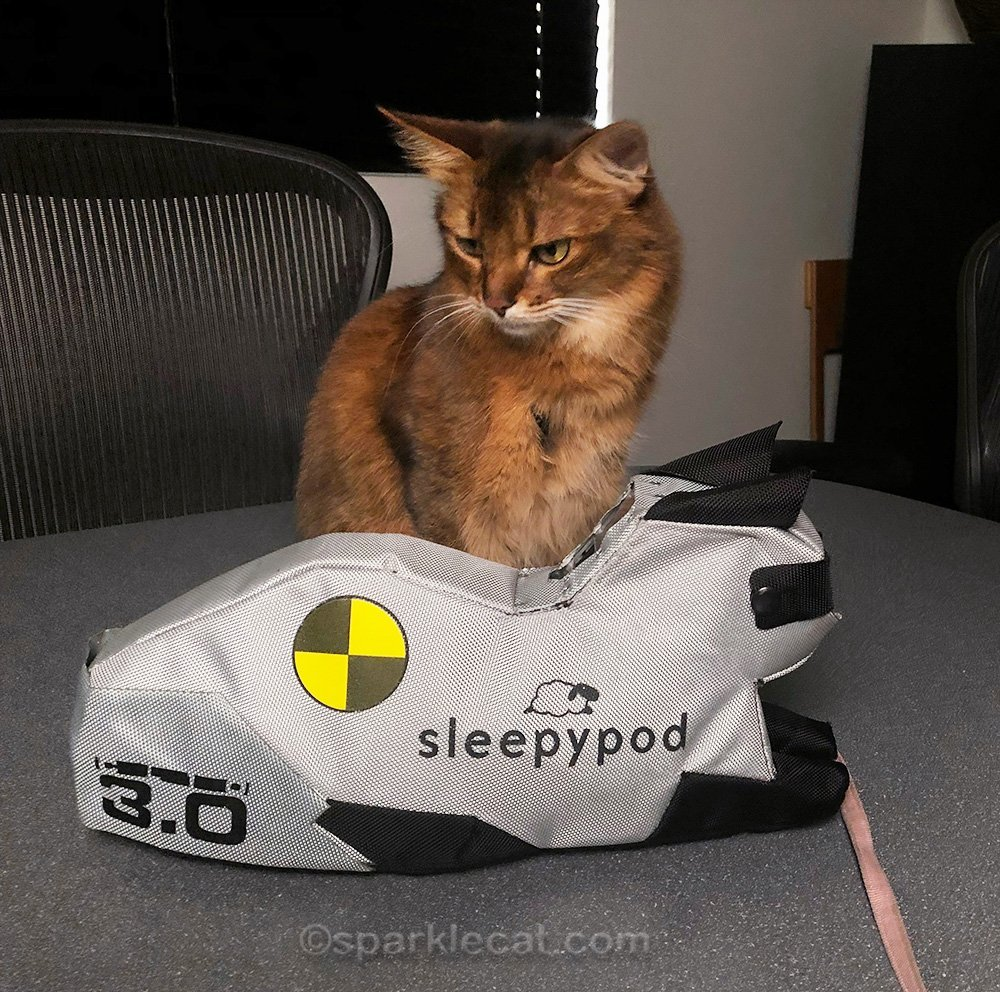 somali cat notices that the Sleepypod crash test kitty does not have a tail
