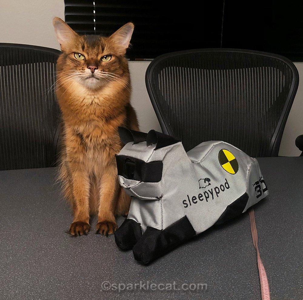 somali cat posing with Cleo, the Sleepypod crash test kitty