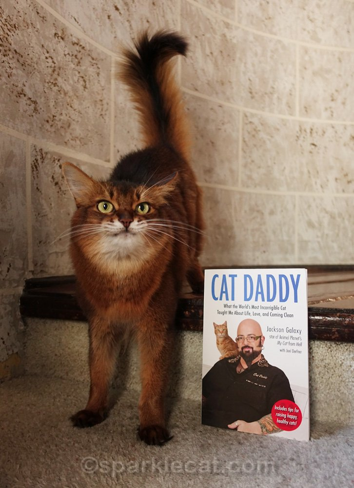 Somali cat posing with Cat Daddy book and making a face