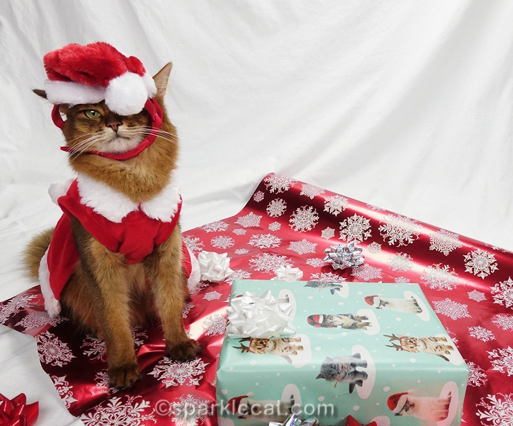 somali cat badly wearing a santa cat hat